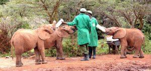 elephant_orphanage_nairobi1